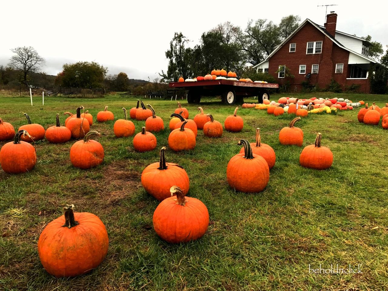 Pumpkin Patch at Loudounberry Farm & Garden – beholdnclick